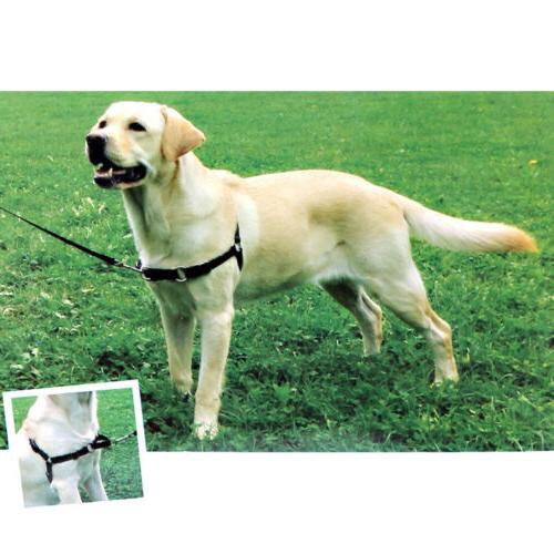 Heavy Duty Nylon Leading Dog Harness Walk Collar Lead Leash