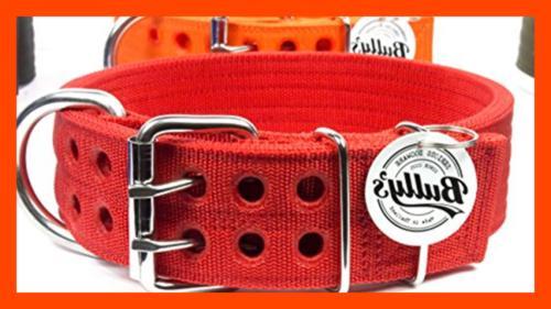 Pitbull Dog LARGE Heavy Duty Nylon Stainless Steel Hardware MEDI