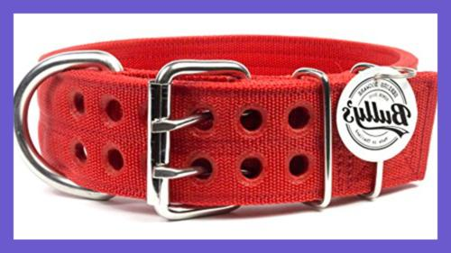 Pitbull Collar Dog LARGE Heavy Duty Nylon